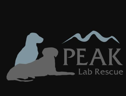 Compassion Project for Peak Lab Rescue – Hurricane Florence impact led by Ambassador Mitchell